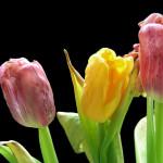 Atemtherapeuten Mastertraining - In Würde älter werden