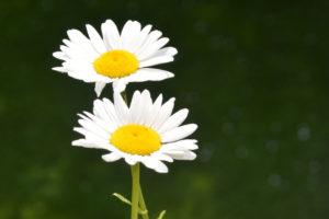 Atemtherapeuten Mastertraining: Dualität